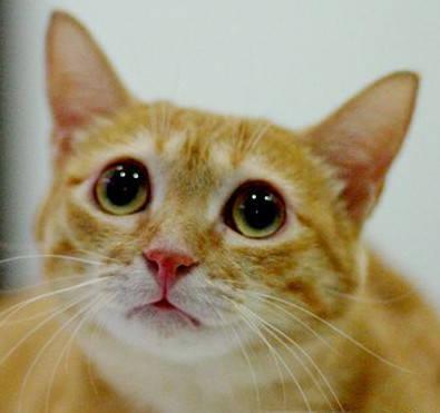 原来柴犬偷偷闻了橘猫的屁股,被橘猫打了。网友:太佩服橘猫的防狼技术了