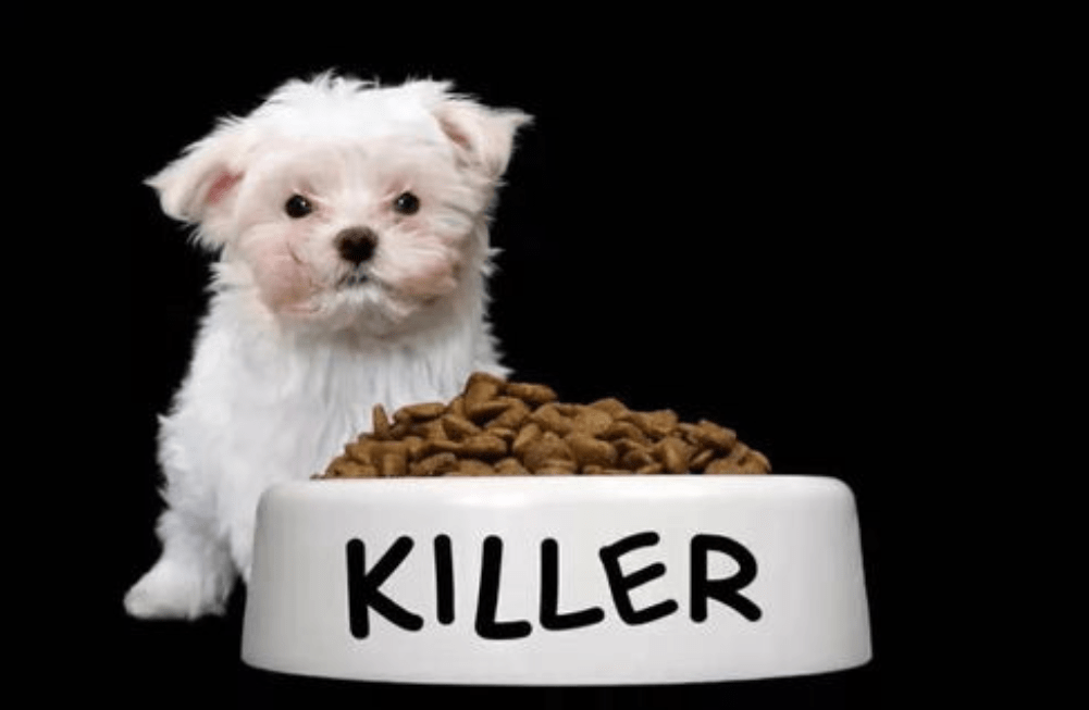 原来28只狗死了8只病了!不要买这个FDA紧急曝光的狗粮品牌