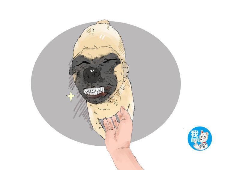 狗狗从屠宰场被救下,看到救命恩人时,做出的反应让人笑中带泪 (图5)