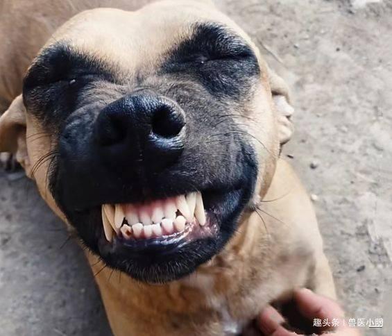 狗狗从屠宰场被救下,看到救命恩人时,做出的反应让人笑中带泪 (图1)