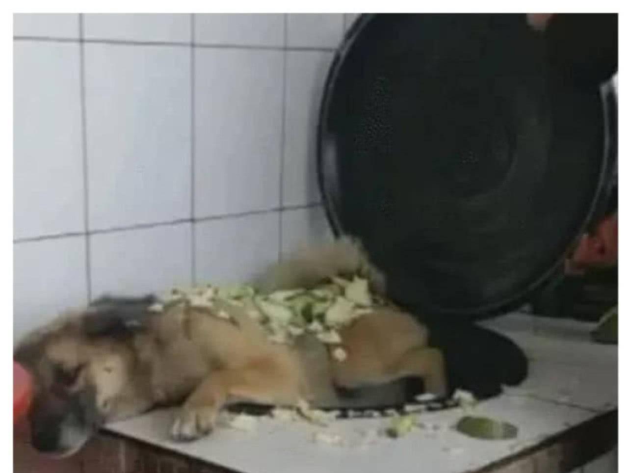 做饭到一半,狗狗竟主动跳进锅里,主人气的想炖狗肉:是要加餐?