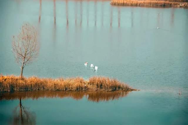 安徽阜南:冬日蒙洼色彩斑斓  秀美家乡勃勃生机