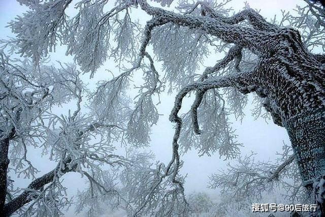 华北地区仅存的原始森林,面积达24800公顷,冬天还可以欣赏雾凇  第3张