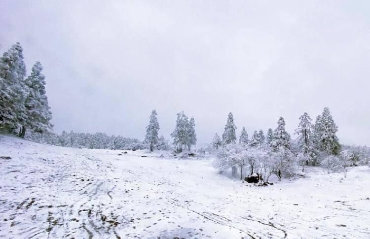 赏雪滑雪泡温泉,1月就去重庆这些地方吧!