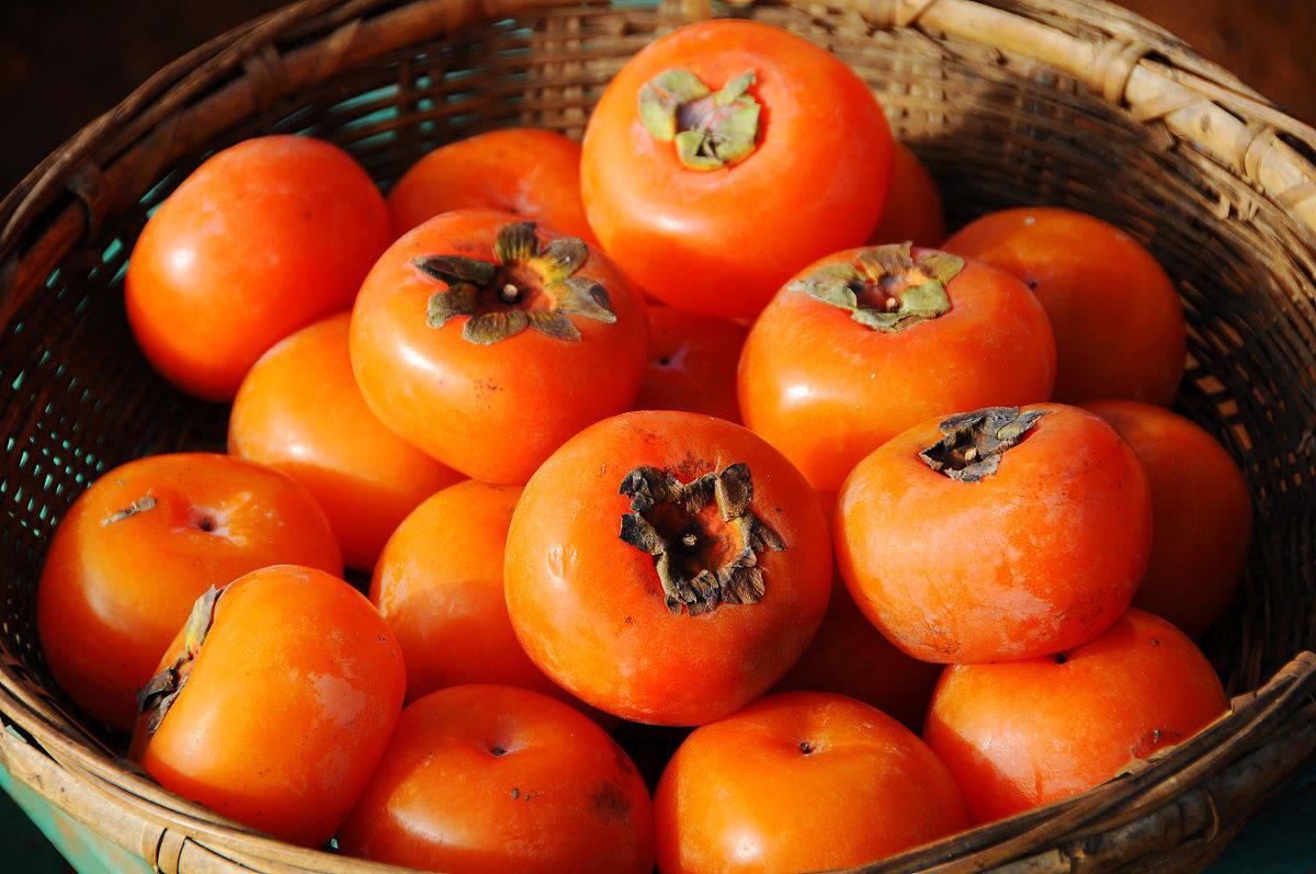 京医通 | 空腹吃柿子容易长结石?医生:注意这3点就没事儿