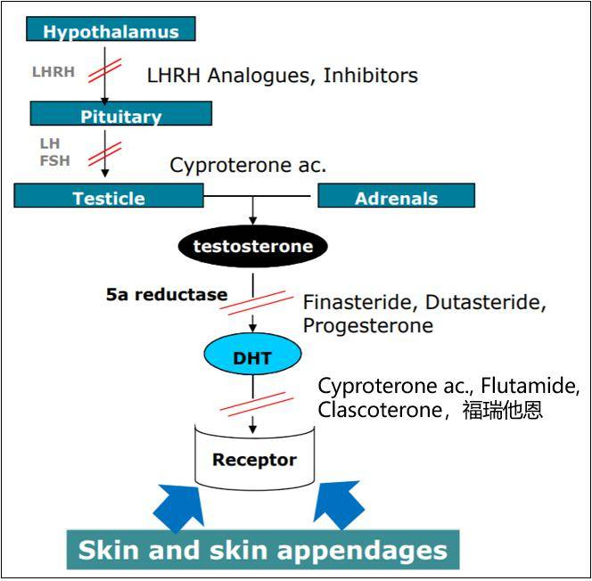 激素类药膏的原理_去斑药膏的原理