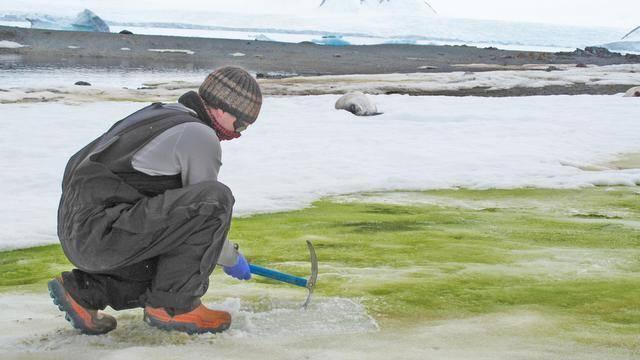 南极变绿了:科学家发现部分地区已被藻类覆盖,从太空都能看到_中欧新闻_欧洲中文网