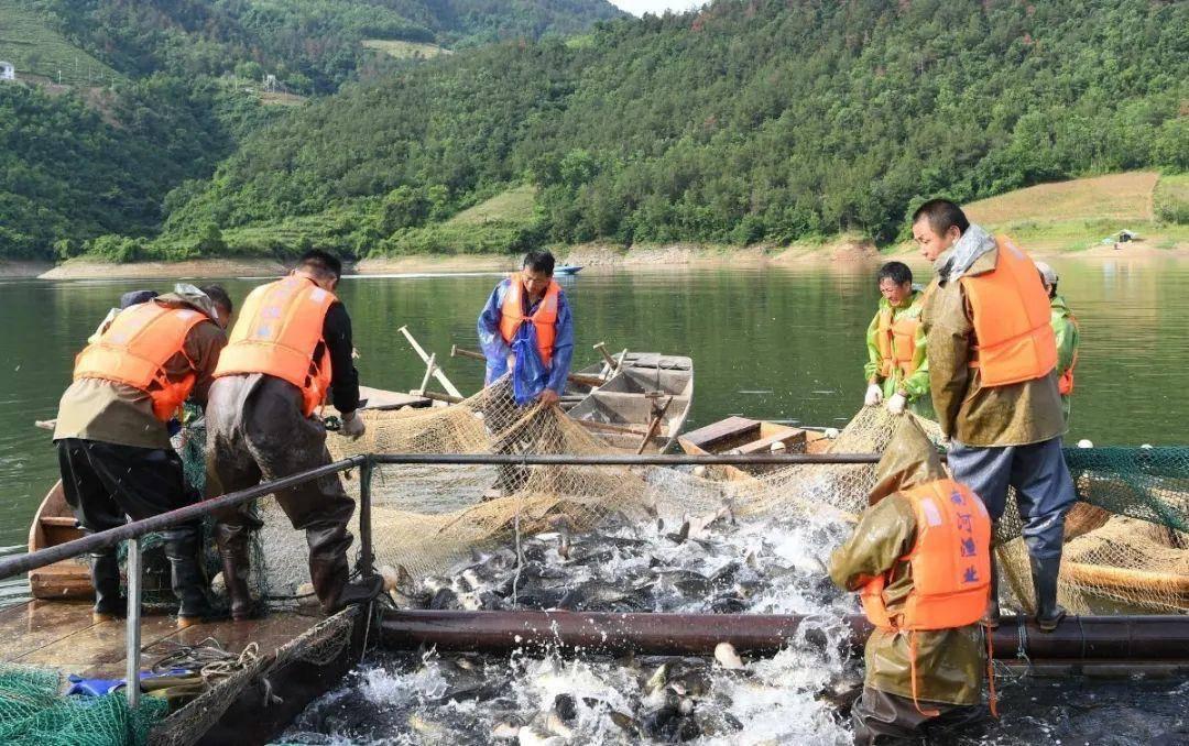 南河渔业:初夏时节鱼满舱,水美人喜奔小康