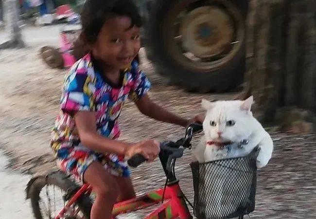 冷漠、霸气,这是一只让泰国人瑟瑟发抖的猫