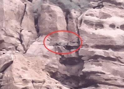 罕见!新疆一游客景区内偶遇雪豹游峡谷