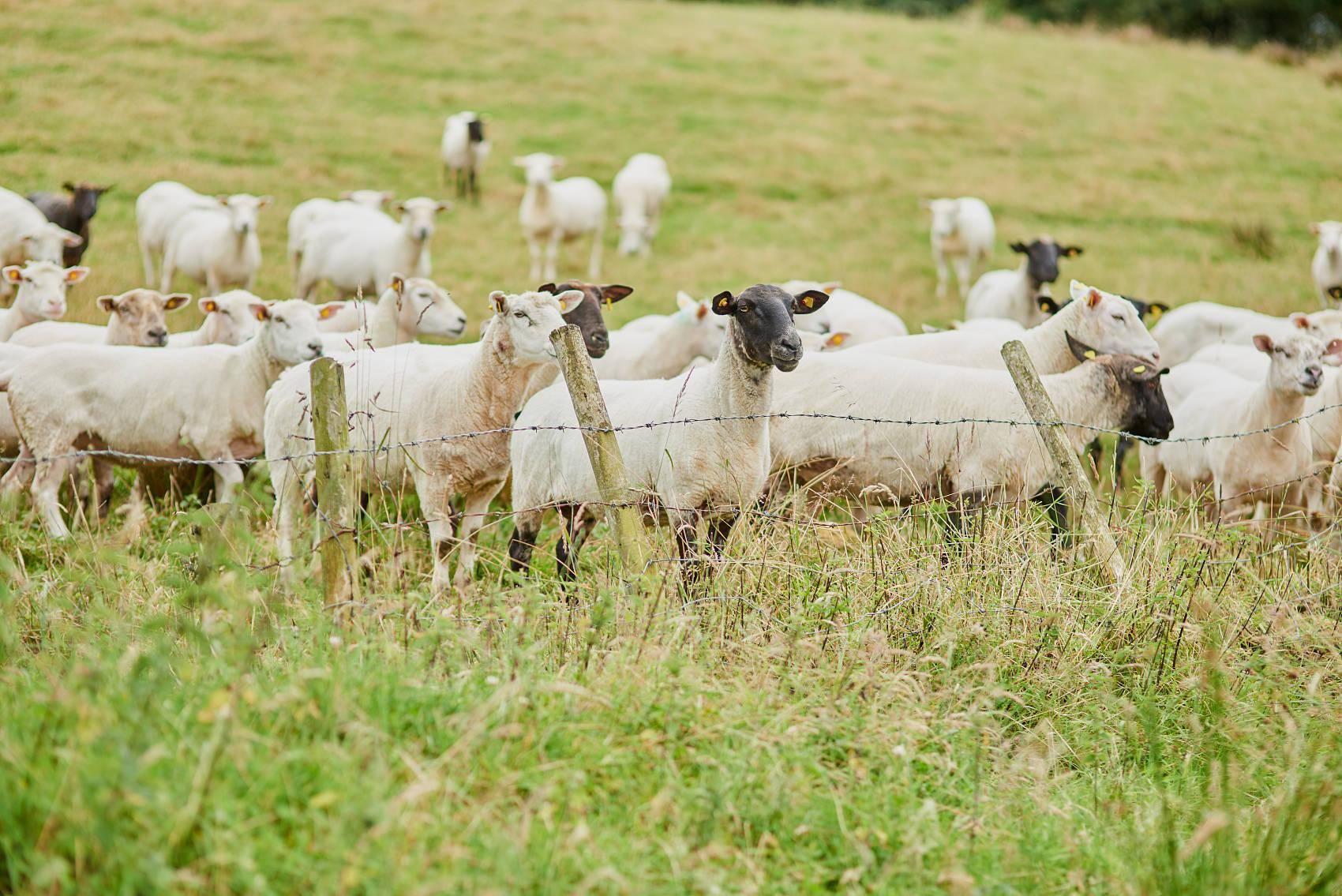 薅羊毛無底線,但有對手
