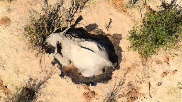 非洲国家博茨瓦纳超360头大象神秘死亡,专家推测原因