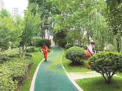 """300余株行道树 """"扩""""出2000平方米城市绿地"""