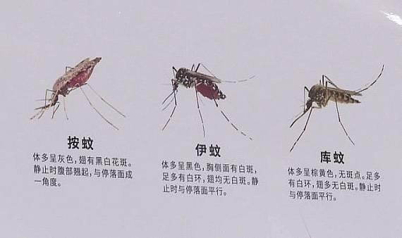 江苏句容出现1例登革热病例