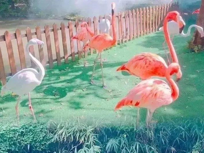 【上海】送上海海昌海洋公园门票+上海野生动物园门票,2晚爱莎堡酒店动漫高级房,遛娃度假首选~999元三天两夜!手慢被抢光!