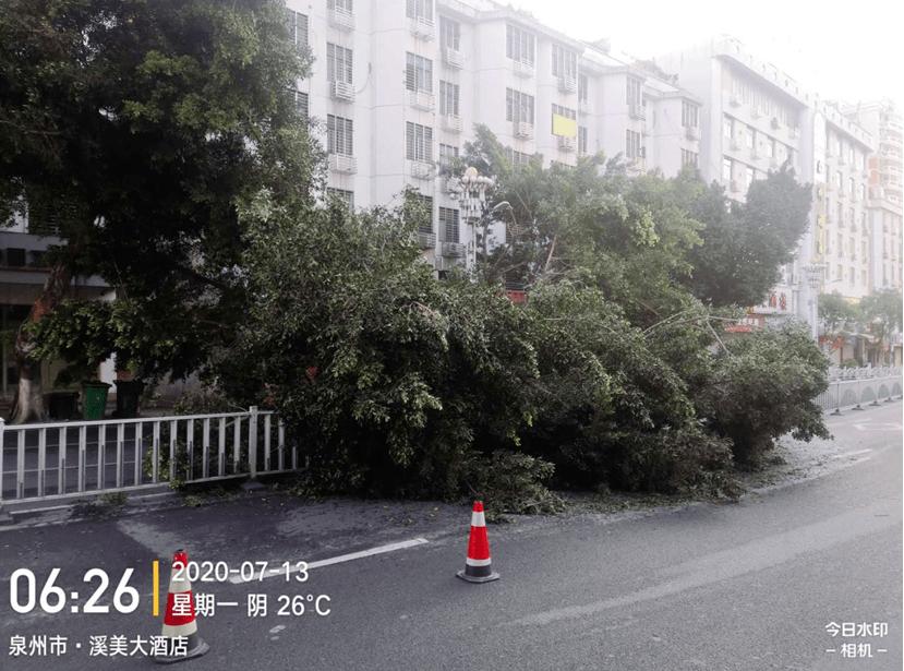 太惊险了!南安的一辆卡车刮倒了主干道边的两棵大榕树。 南安大货车太多