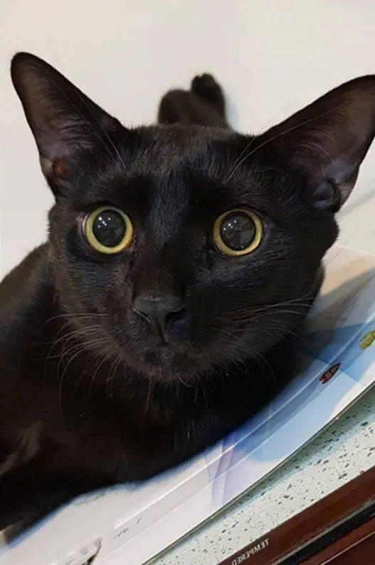 黑猫本来在睡觉,一看到主人拿手机在摄影,它立马变脸!