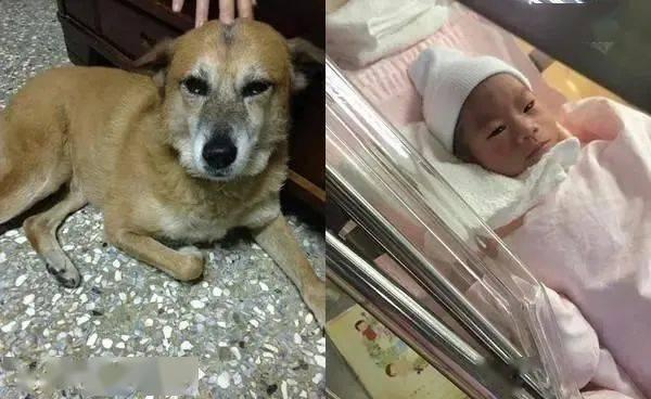 """""""记得来当我小孩!""""她梦见已逝爱犬后怀孕,宝宝眼神让网友惊呼"""