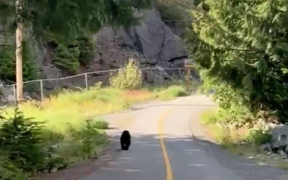 超淡定:美女爬山惨遭黑熊强抱!拍腿、轻拉要抢压寨夫人,她竟还自拍…