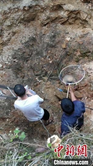动物|云南警方救助猪獾、鵟等一批野生保护动物