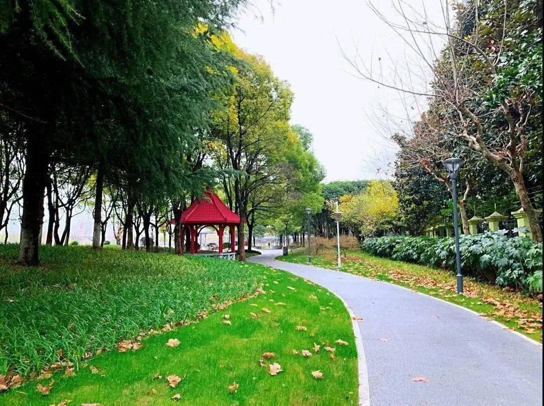 闵行区滨水生态廊道建设(图4)