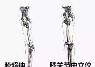 每天揉一次大腿内侧, 两周后 , 奇迹出现了!_根部