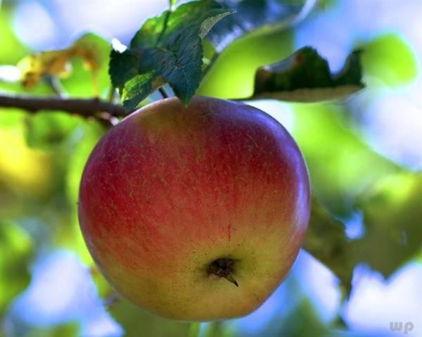 孕妇多吃这几种水果和果汁,天然美味又健康,不想吃都难哦!