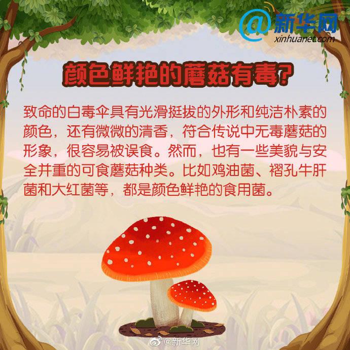 毒蘑菇出没!远离中毒,这些小知识,一起学起来