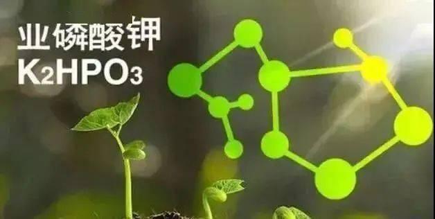 新产品引进新星产品,金正大亚磷酸钾来了