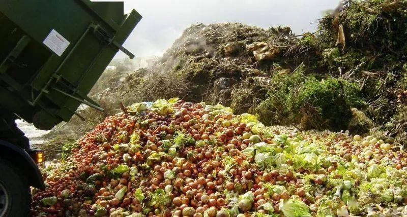 美国的城市固体垃圾中,食物占比竟高达22%。
