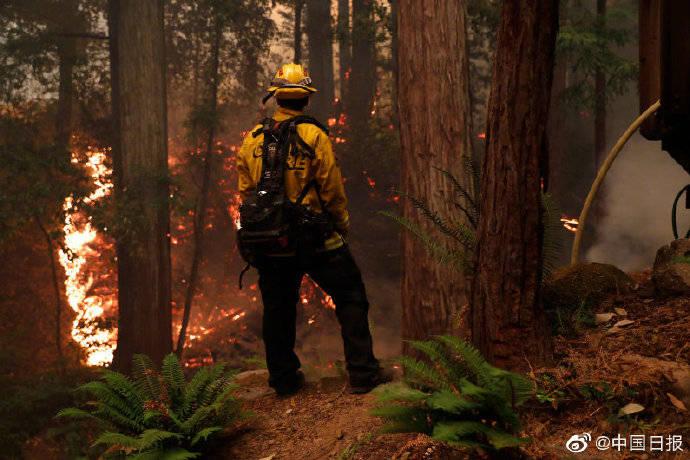 由于火灾频繁,加州计划在五年内砍伐4000万亩森林