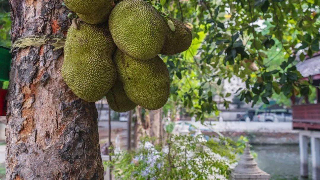 不适合放在冰箱里的热带水果 什么食物适合放冰