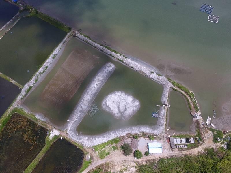 在广东,我国首个海龟野化基地正式启用,首批放入15只绿海龟