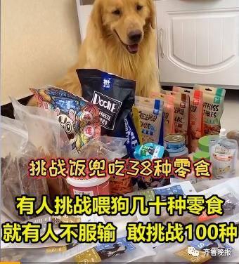 宠物博主让狗当大胃王,一次吃100种零食!网友:为了卖货不择手段