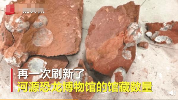 广东河源发掘33枚恐龙蛋化石,当地馆藏数量逼近两万枚