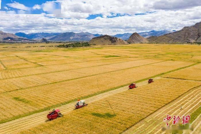 农业乡村部:秋粮面积估计超12.8亿亩 丰登已成定局