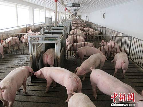 农业农村部:有信心实现全年生猪产能基本恢复到接近常年水平