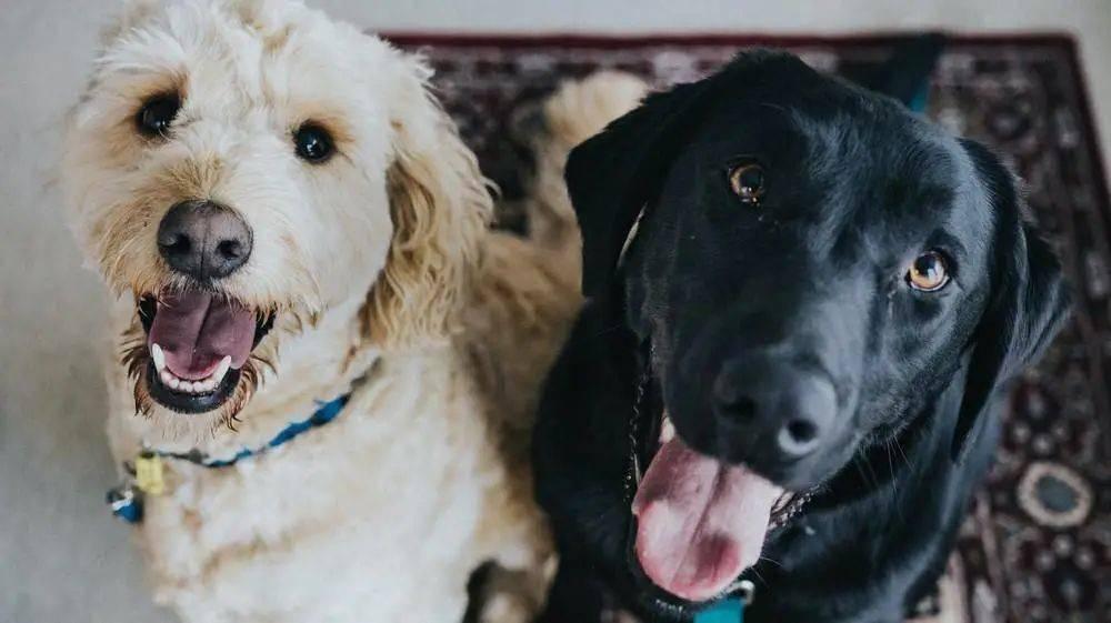 别的简报|研究发现狗狗根本不管你长什么样