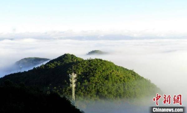 云南无量山发现中国鸟类新记录种——白腹针尾绿鸠
