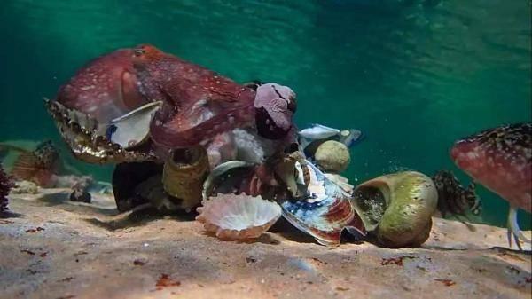 我的章鱼老师-3