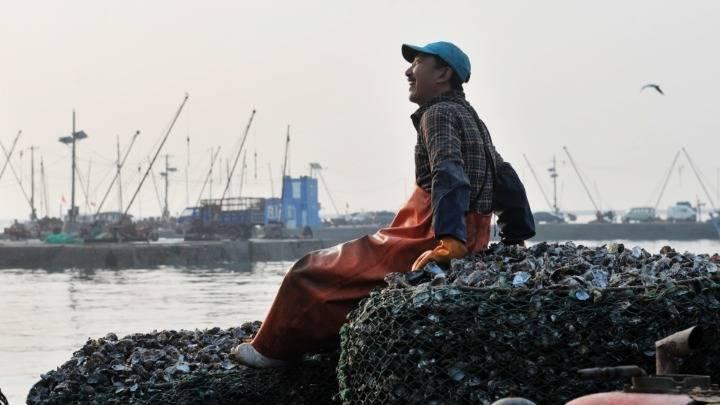 山东青岛:金秋牡蛎迎丰收