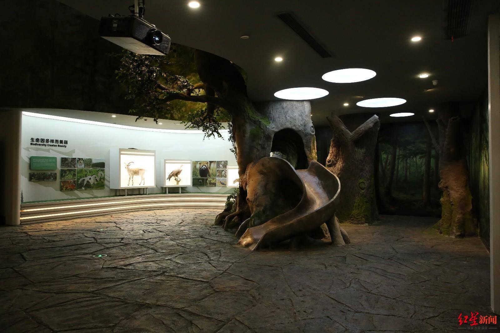"""""""成都大熊猫博物馆""""开启内部试运行!七大展区,预计元旦前后对公展出"""