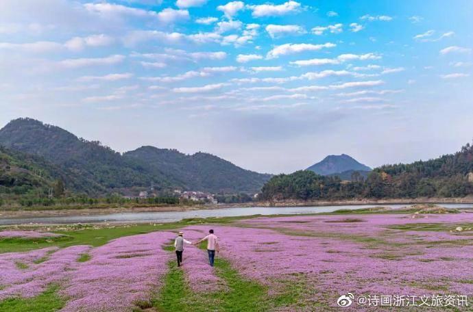 又挖到一个神仙拍照地!粉紫色的野生花海,美成了天堂模样!