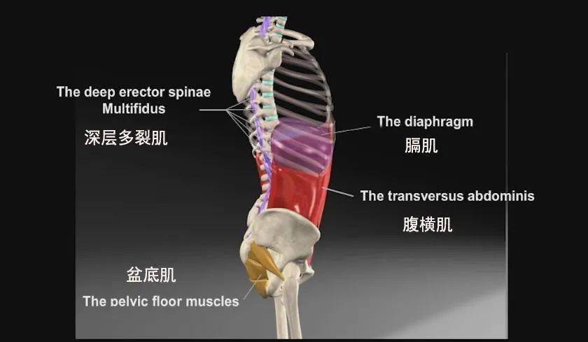 练瑜伽,如何激活核心?这4个动作+呼吸很有效!