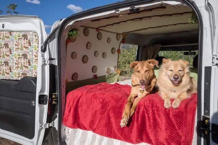 你为狗狗做过最酷的事是什么?这些回答让网友狂酸