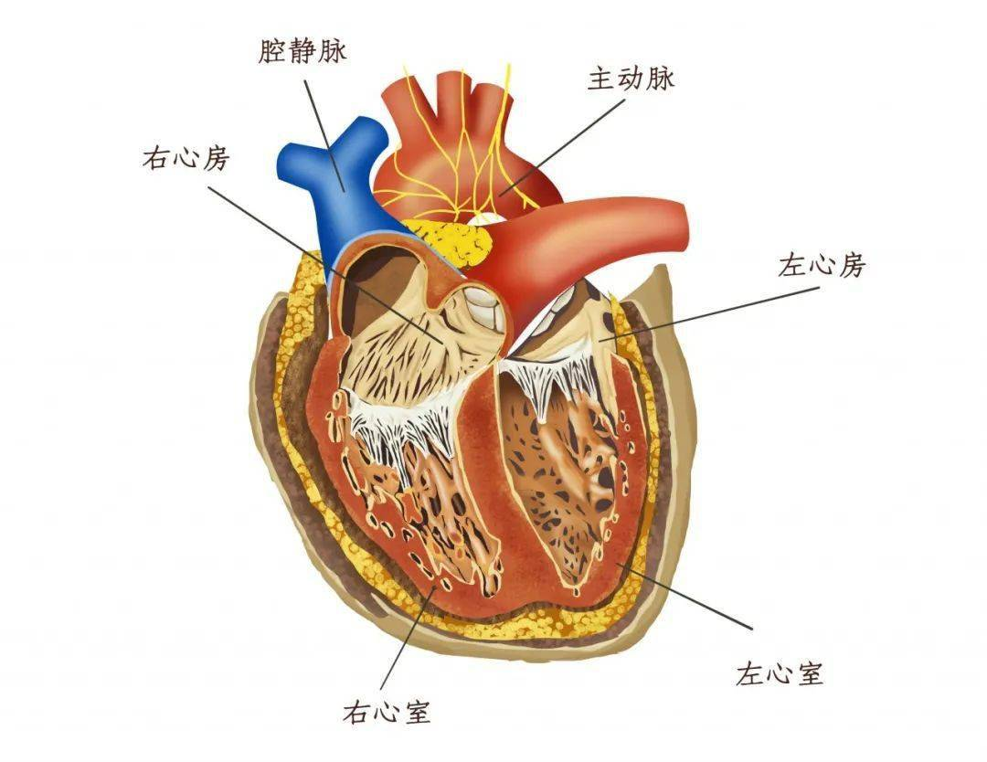 心肌炎病历证明图片