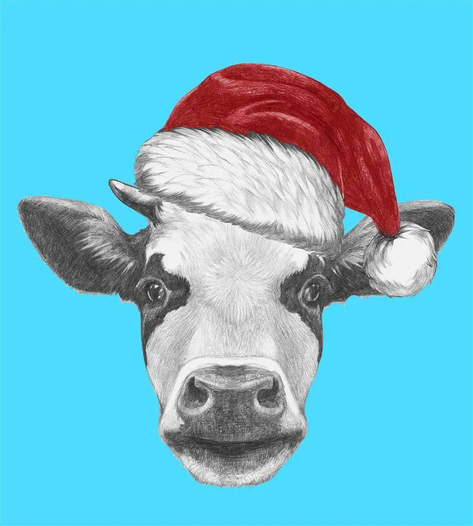 Why a cow might be the most vital Christmas gift you give