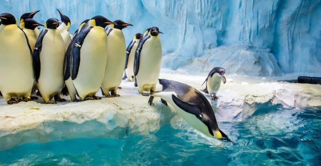 全票8折起   珠海长隆海洋王国极地狂欢节开启!感受不一样的冬天!