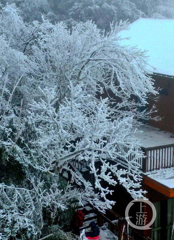 神奇金佛山 雪后现奇观