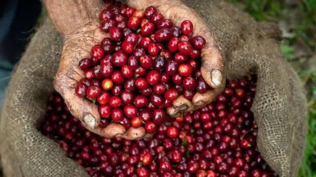 几个小众咖啡产地的咖啡,你了解吗 博主推荐 第1张